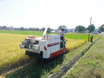 七城米 長尾農園 美しすぎる田んぼの稲刈り(2021) 新米の出荷は10月下旬からの予定です!(前編) _a0254656_20111430.jpg