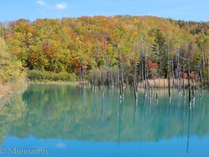 紅葉の「青い池」~10月の美瑛_d0340565_20330663.jpg