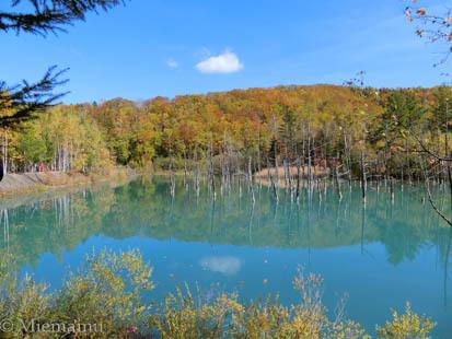 紅葉の「青い池」~10月の美瑛_d0340565_20331139.jpg