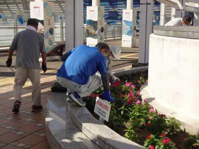 名古屋港水族館前花壇の植栽R3.10.6_d0338682_08220933.jpg