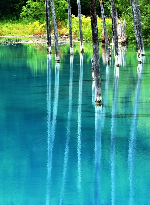 青き池の静かさよ_c0067690_09524708.jpg