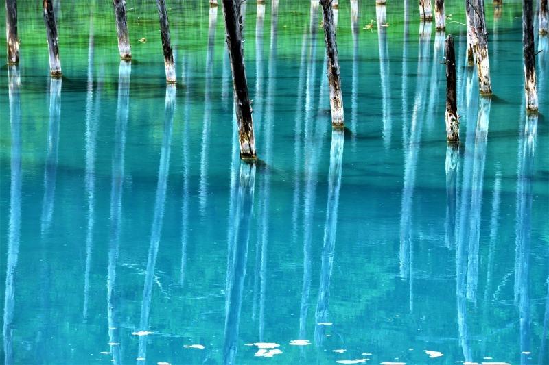 青き池の静かさよ_c0067690_09563169.jpg