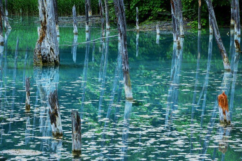 青き池の静かさよ_c0067690_10060766.jpg