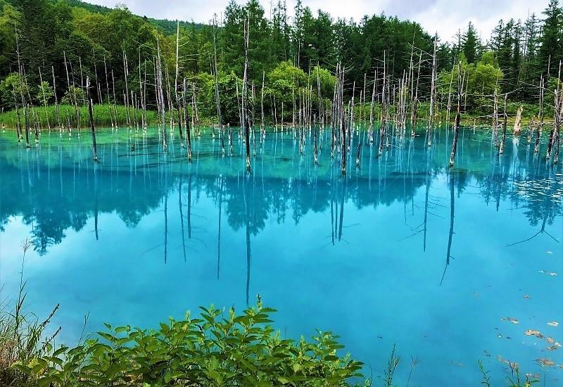 青き池の静かさよ_c0067690_10423500.jpg
