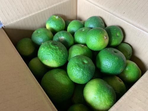 酢橘♪_b0144891_20271748.jpg