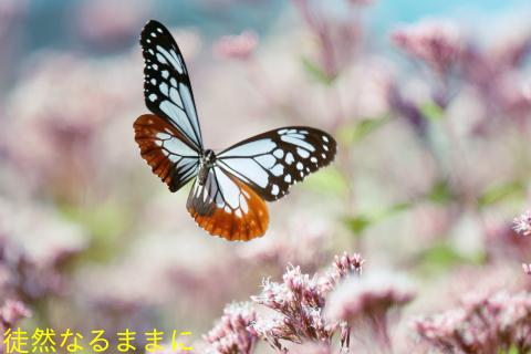 ヤクシマルリシジミ_d0285540_20361451.jpg