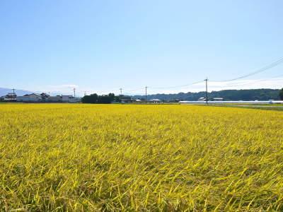 七城米 長尾農園 美しすぎる田んぼの稲刈り(2021) 新米の出荷は10月下旬からの予定です!(後編) _a0254656_18105749.jpg