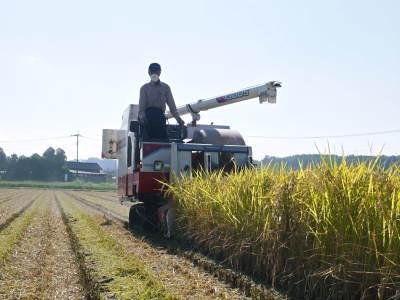 七城米 長尾農園 美しすぎる田んぼの稲刈り(2021) 新米の出荷は10月下旬からの予定です!(後編) _a0254656_18123173.jpg