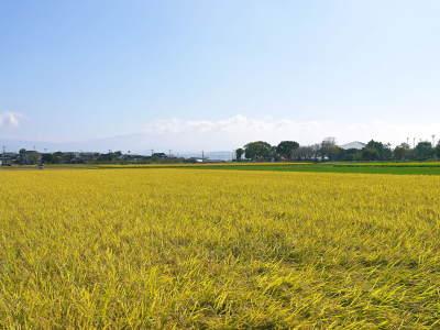七城米 長尾農園 美しすぎる田んぼの稲刈り(2021) 新米の出荷は10月下旬からの予定です!(後編) _a0254656_18135022.jpg