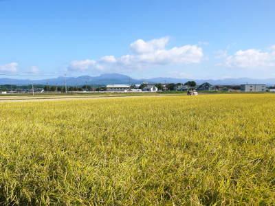 七城米 長尾農園 美しすぎる田んぼの稲刈り(2021) 新米の出荷は10月下旬からの予定です!(後編) _a0254656_18162197.jpg