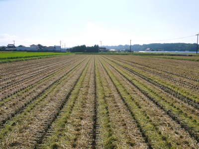 七城米 長尾農園 美しすぎる田んぼの稲刈り(2021) 新米の出荷は10月下旬からの予定です!(後編) _a0254656_18193012.jpg