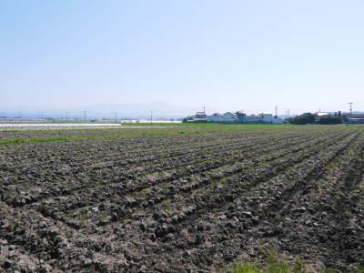 七城米 長尾農園 美しすぎる田んぼの稲刈り(2021) 新米の出荷は10月下旬からの予定です!(後編) _a0254656_18280183.jpg