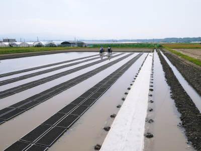 七城米 長尾農園 美しすぎる田んぼの稲刈り(2021) 新米の出荷は10月下旬からの予定です!(後編) _a0254656_18341695.jpg