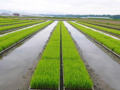 七城米 長尾農園 美しすぎる田んぼの稲刈り(2021) 新米の出荷は10月下旬からの予定です!(後編) _a0254656_18393811.jpg