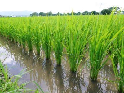 七城米 長尾農園 美しすぎる田んぼの稲刈り(2021) 新米の出荷は10月下旬からの予定です!(後編) _a0254656_18403461.jpg