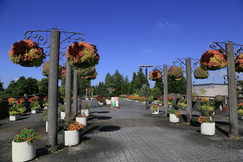 散歩代わりに宇治の植物公園へ_a0105680_22483338.jpg