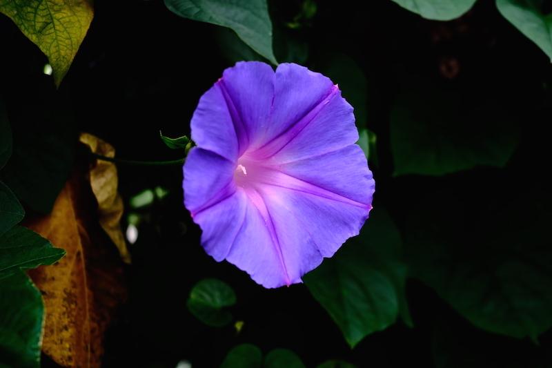 青紫_a0350198_00001318.jpg