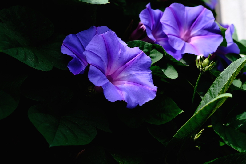 青紫_a0350198_00002899.jpg