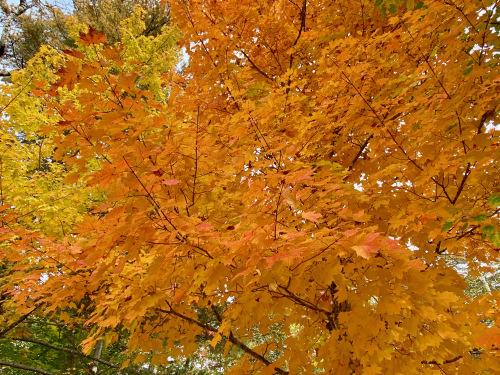 Autumn, Drive, 2021 (秋・ドライブ・2021) - 3_b0129324_04402939.jpeg