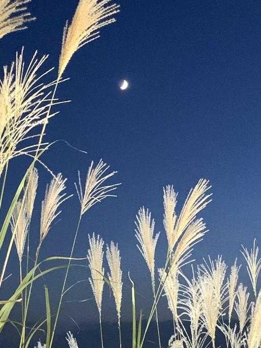10月18日 十三夜・栗名月の日・「風吹不動天辺月」_b0255824_21134947.jpg