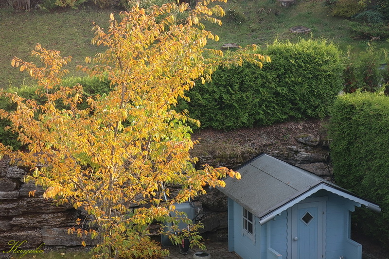 秋色 と パンケーキ_a0353839_23341636.jpg