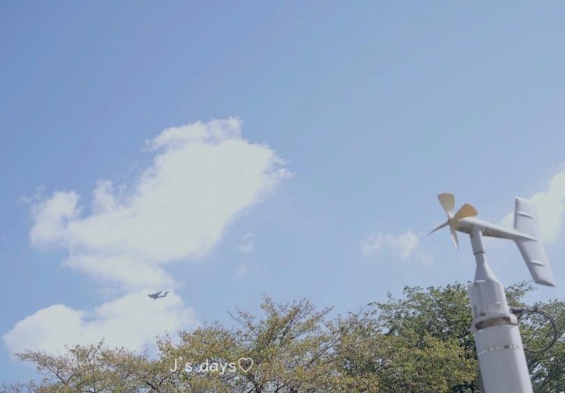 飛行機とコスモス☆_a0198883_18104537.jpg