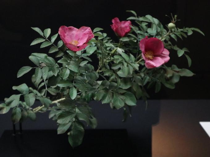 「バラのすべて」に行ってまいりました♪_b0331802_23164111.jpg