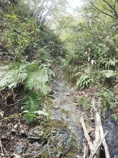 奥美濃・秋山ハイキング…藤ノ谷から西宮_c0359615_10492162.jpg