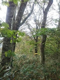 奥美濃・秋山ハイキング…藤ノ谷から西宮_c0359615_10494613.jpg