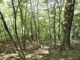 奥美濃・秋山ハイキング…藤ノ谷から西宮_c0359615_10501202.jpg