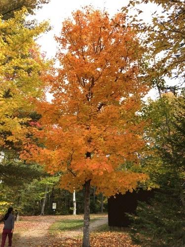 Autumn, Drive, 2021 (秋・ドライブ・2021) - 3_b0129324_02310992.jpg