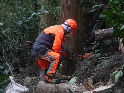 台風で傾いたスギの幹に腐り:10・16六国見山手入れ_c0014967_17565118.jpg