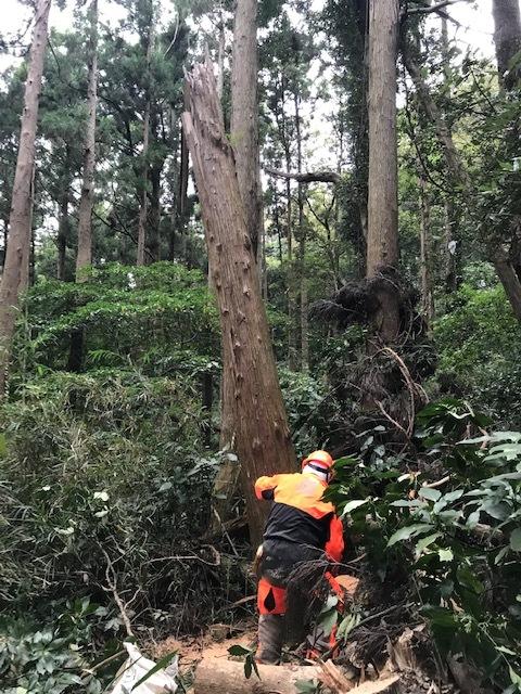 台風で傾いたスギの幹に腐り:10・16六国見山手入れ_c0014967_17583663.jpg