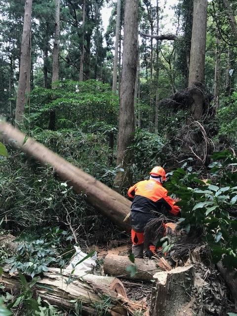 台風で傾いたスギの幹に腐り:10・16六国見山手入れ_c0014967_17585206.jpg