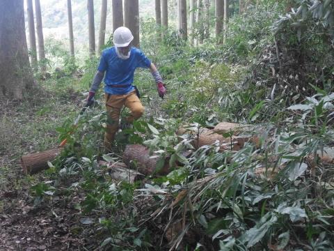 台風で傾いたスギの幹に腐り:10・16六国見山手入れ_c0014967_18000665.jpg