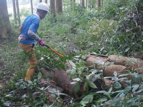 台風で傾いたスギの幹に腐り:10・16六国見山手入れ_c0014967_18001605.jpg