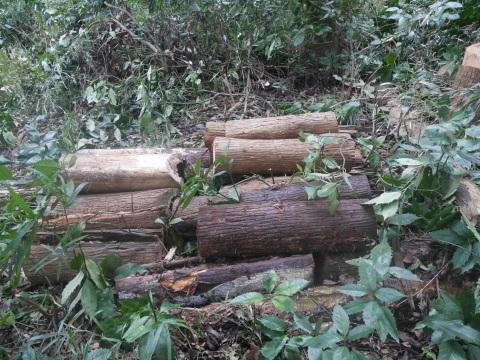 台風で傾いたスギの幹に腐り:10・16六国見山手入れ_c0014967_18003420.jpg