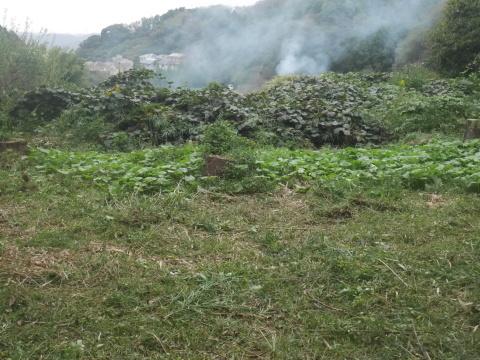 台風で傾いたスギの幹に腐り:10・16六国見山手入れ_c0014967_18033443.jpg
