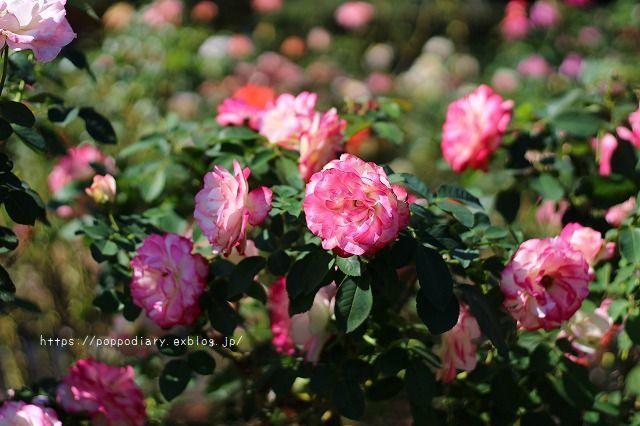 植物園に行ってきました(*^^*)_a0134594_23514071.jpg