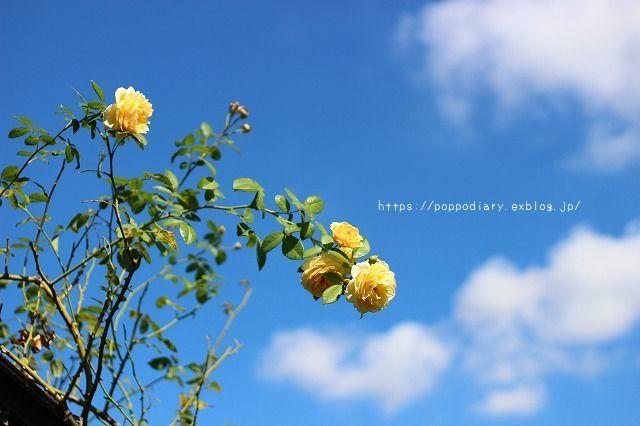 植物園に行ってきました(*^^*)_a0134594_23514901.jpg