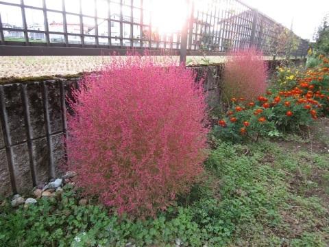我が家の庭も秋色に。_f0281398_22262103.jpg