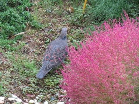 我が家の庭も秋色に。_f0281398_22284804.jpg