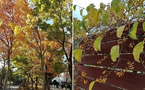 近所の秋色_c0048117_13230644.jpg