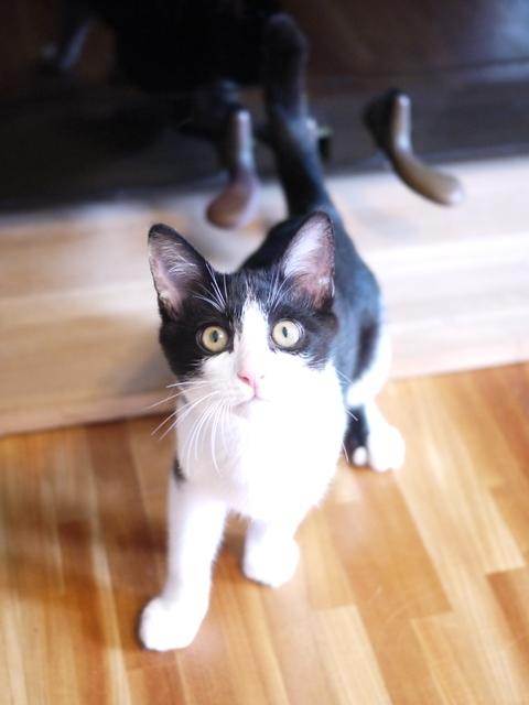 猫のお留守番 リンくん編。_a0143140_16512277.jpg
