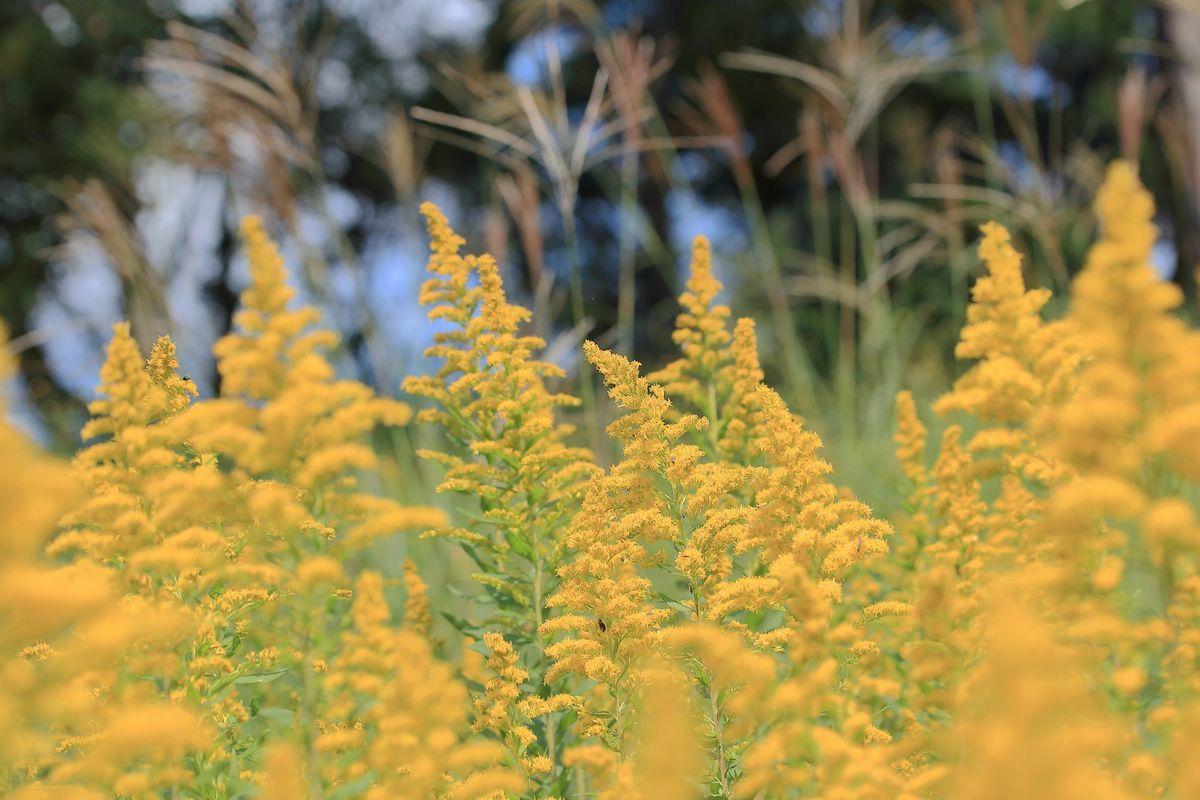 「秋色」を撮る_b0184848_18220188.jpg