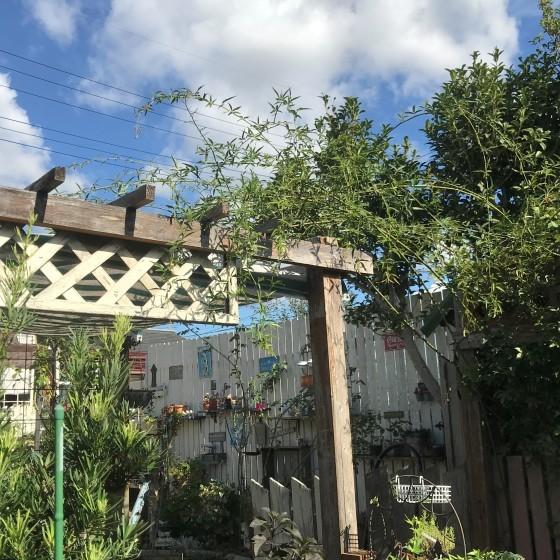 10月18日・・・寒い朝だった~庭に出ると次々にやることが湧いてくる(^^)v_f0366679_20575500.jpg