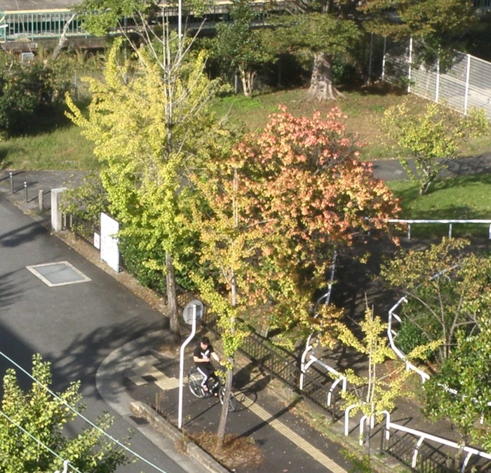 季節は突然の晩秋です_d0006690_17320433.jpeg