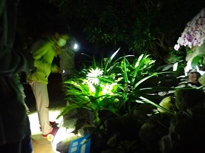 初めての温室ナイトツアー_f0203094_09274921.jpg