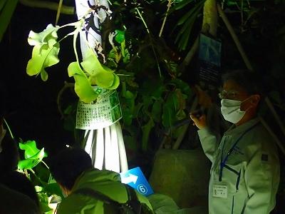 初めての温室ナイトツアー_f0203094_09381466.jpg