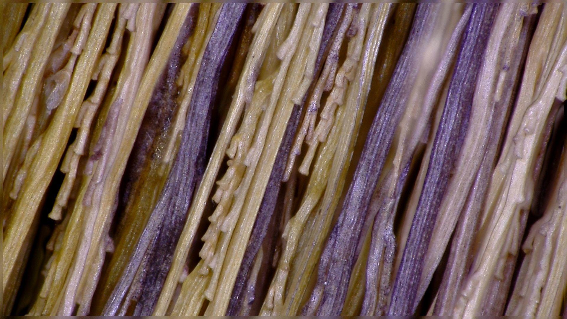 【マイクロスコープの斉藤光学です】ほうきを観察しました。_c0164695_17274365.jpg